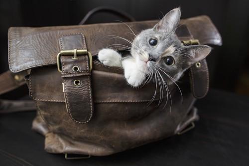カバンの中に入って顔を出す猫
