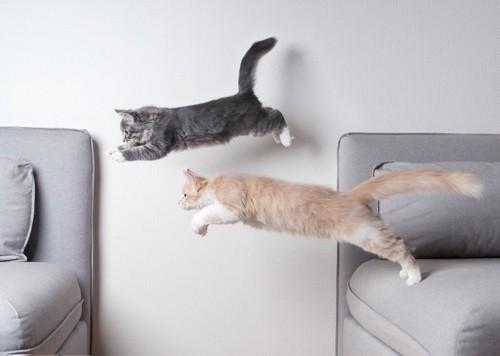 二匹で飛ぶ猫