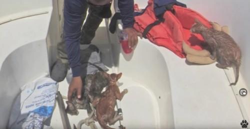 救助され別の船上にいる猫