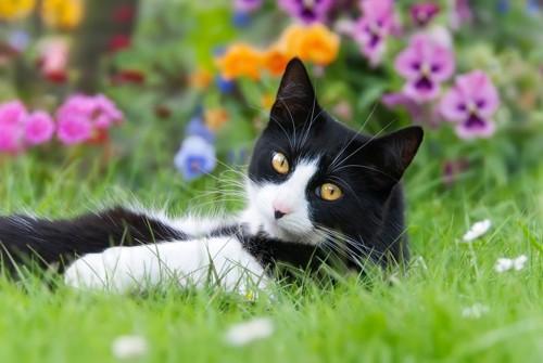 庭で寝そべっている猫