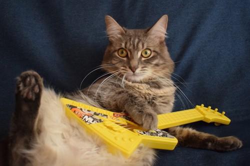 おもちゃのギターを抱えた猫
