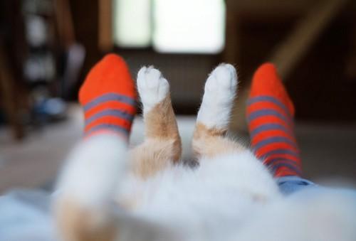 仰向けの猫の足と人の足