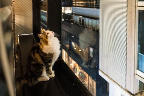 窓から外をみる猫