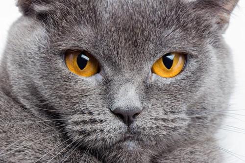 猫のドアップ
