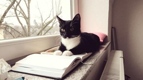 窓ぎわの猫