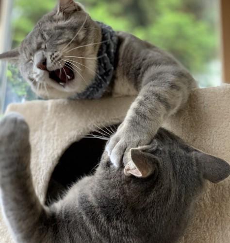 喧嘩中の猫2匹