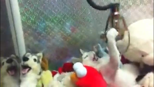 アームに怒る猫