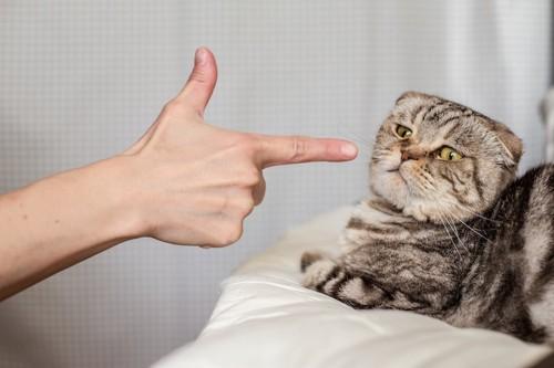 人の手に指されて嫌そうな猫