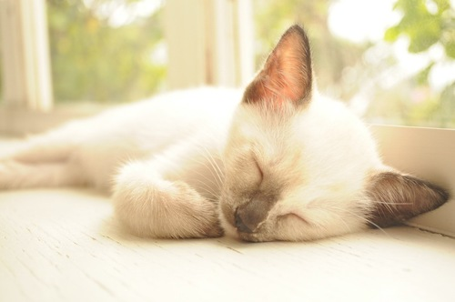 陽だまりで昼寝をする子猫