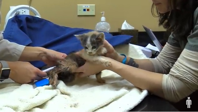 治療する子猫
