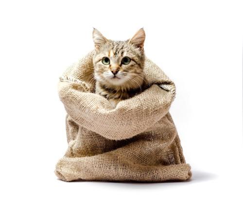 麻の袋に入って顔を出す猫