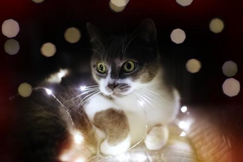 灯りの中で目を丸くしている猫