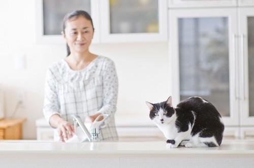 キッチンで飼い主のそばにいる猫