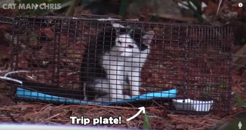 捕獲器の中の猫と矢印が示す青いマット