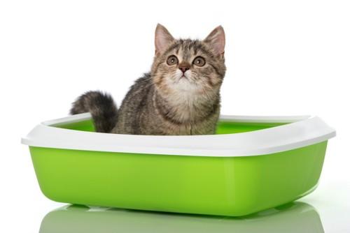 トイレに座っている猫