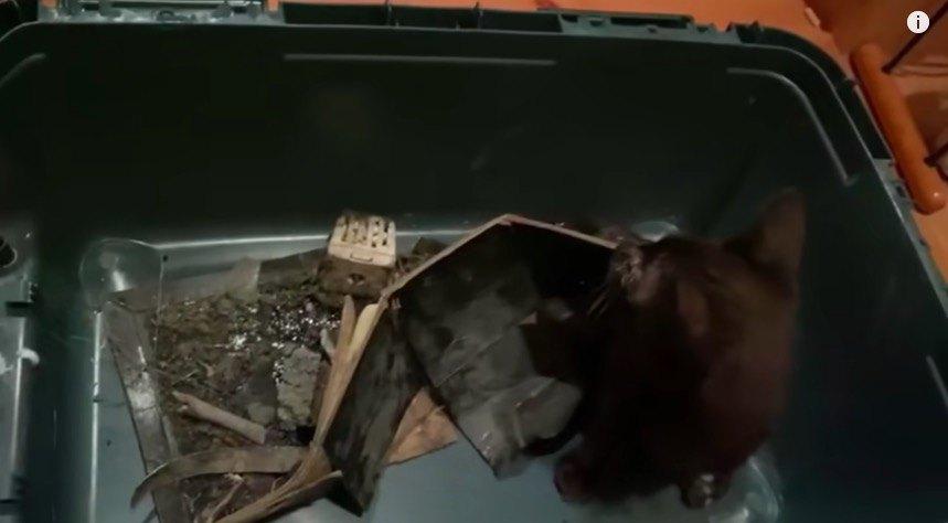 ネズミ捕りシート