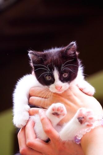 抱き上げられた子猫