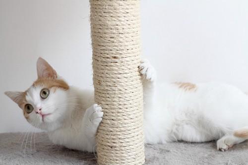 爪とぎで爪を研ぐ猫