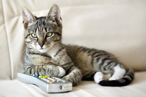 ソファーでテレビのリモコンを持つ猫