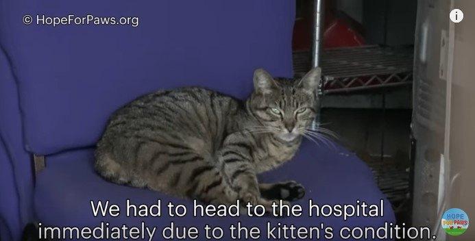 椅子の座面に寝そべる母猫