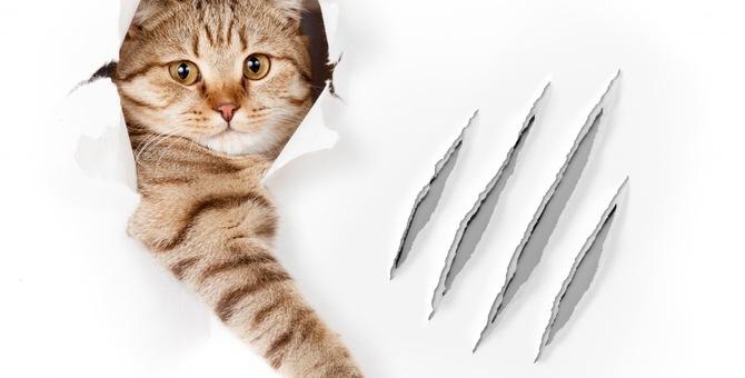 爪の痕と猫
