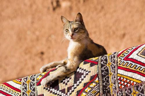 カーペットの上に乗るエジプトの猫