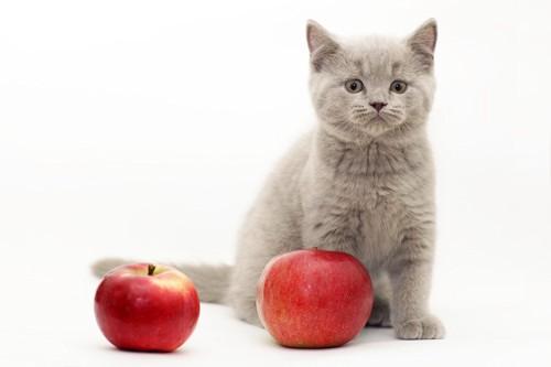 猫とリンゴ