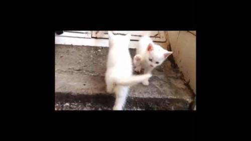 すれ違う兄弟猫