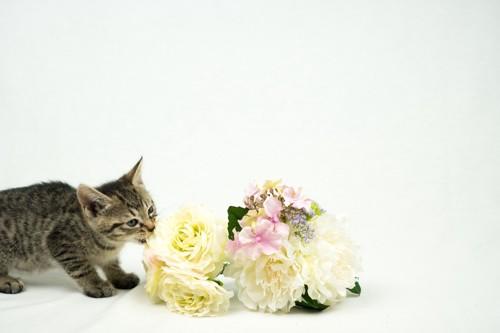花をかじっている猫
