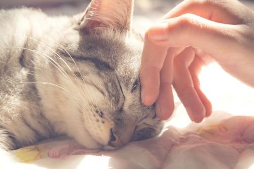 猫がゴロゴロと喉を鳴らしている