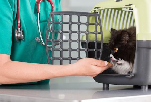 キャリーの中の猫に手を差し出す獣医師