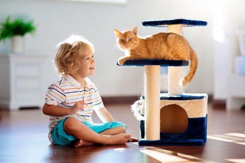 子供とキャットタワーにいる猫