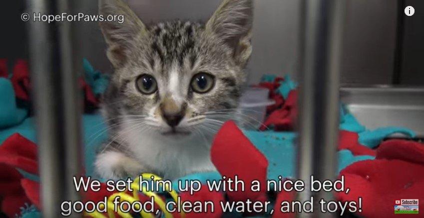 ケージで落ち着いた猫