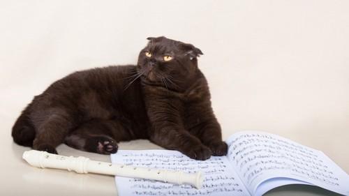 リコーダーと楽譜とくつろぐ猫