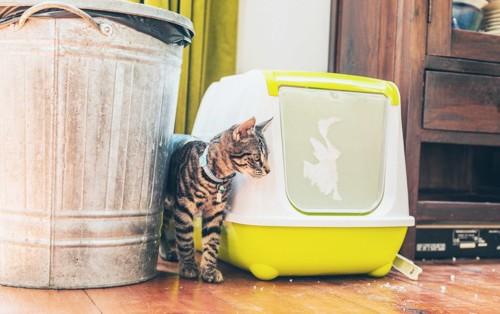 トイレとゴミバケツの間にいる猫