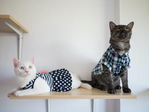 服を着た2匹の猫たち
