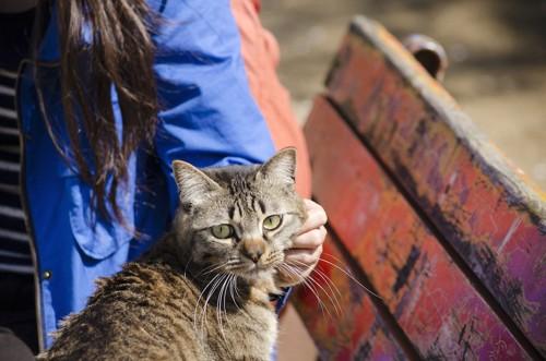 ベンチの上で顔を撫でられている猫