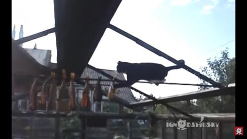 干物を狙う猫