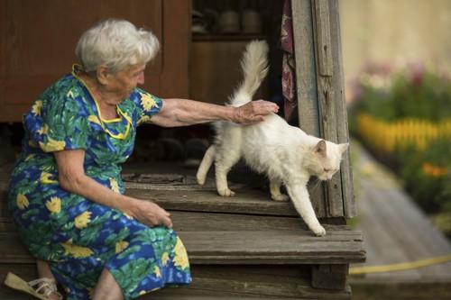白猫を撫でる白髪のおばあさん