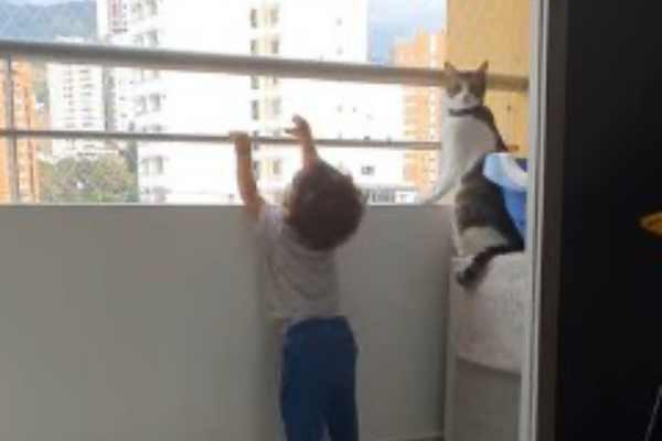 撮影者を振り返って見る猫
