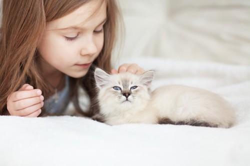 子猫の頭を撫でる女の子