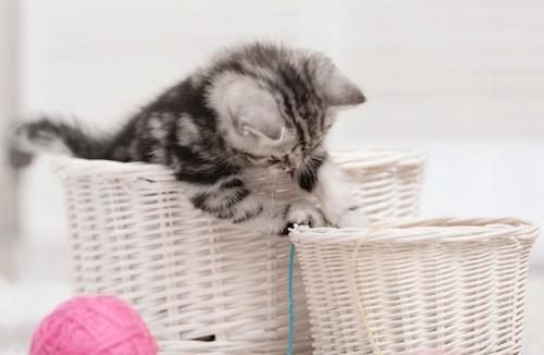 おしゃれなケージを作ろうとしている猫