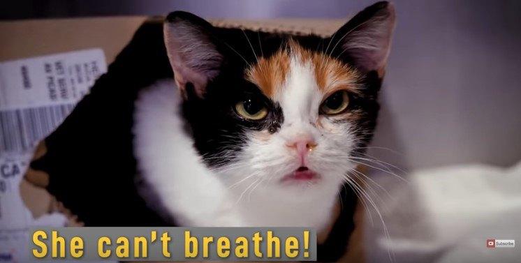 口呼吸する猫