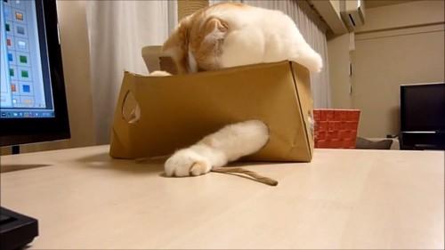 箱に入って遊ぶ猫