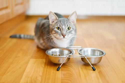 リビングでご飯を食べる猫