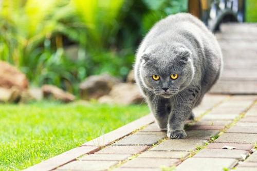 貫禄のある猫