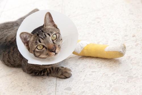 包帯とカラーを巻いている猫