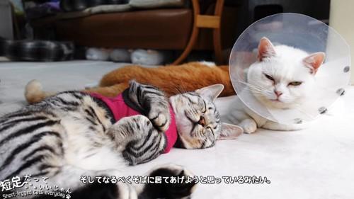 寝てる服を着た猫