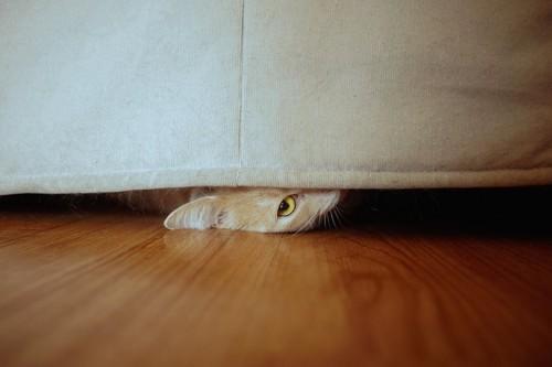 ソファーの下から覗く猫