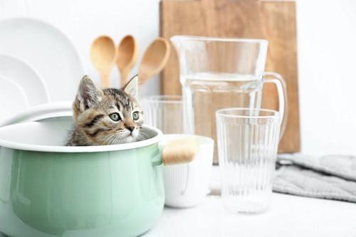 キッチンで鍋の中に隠れる子猫
